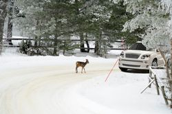 Smail Acura on Tips To Help You Avoid Hitting Deer This Winter   Smail Auto Blog